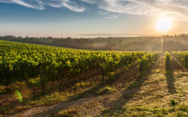 Organic trend shaping the future of global wine market